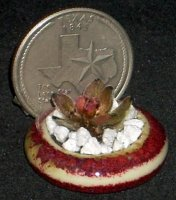 Cactus #6727, Artisan Pot 1:12 Dollhouse Miniature Flower Patio