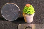 Potted Cactus #A1608 1:12 Dollhouse Miniature