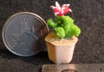 Potted Cactus #A1604 1:12 Dollhouse Miniature